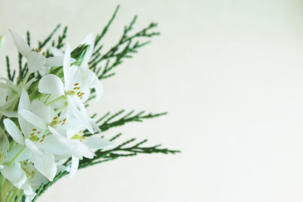 白の花 イメージ